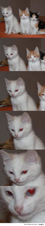 ten kot ma złe zamiary