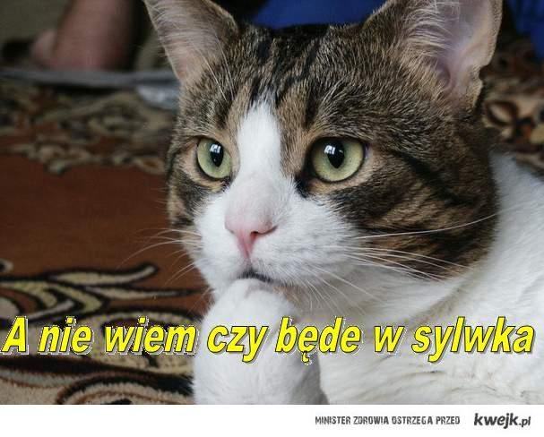 Kociak na sylwka ?