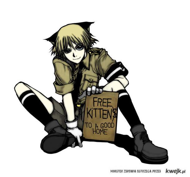 Darmowy kotek