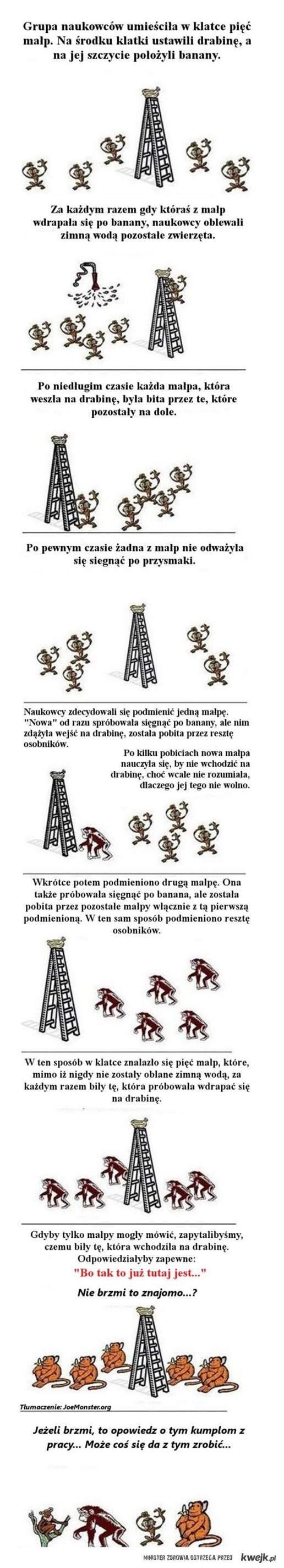 Historia o małpach