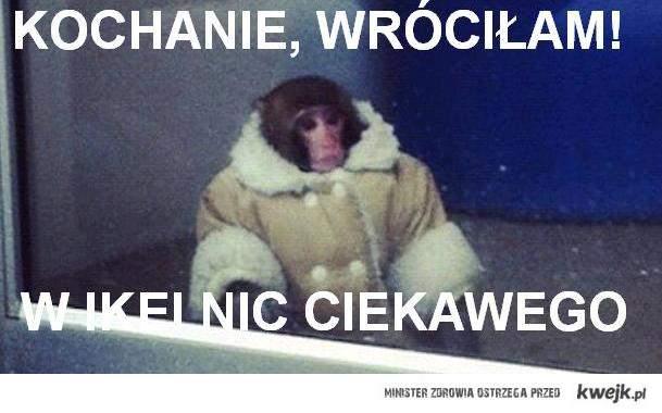 małpka lucynka