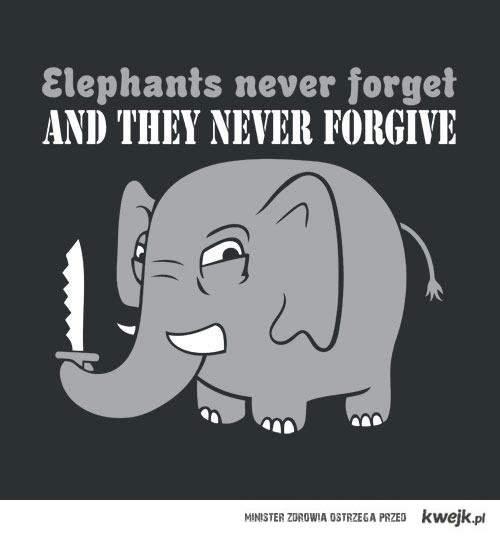 slonie to sukinsyny