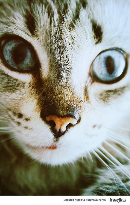 Cat *-*