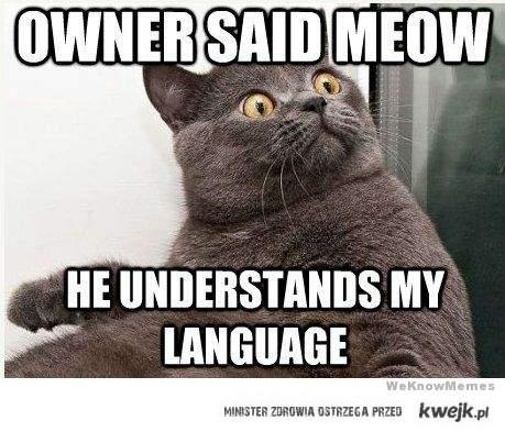 Powiedział miau!