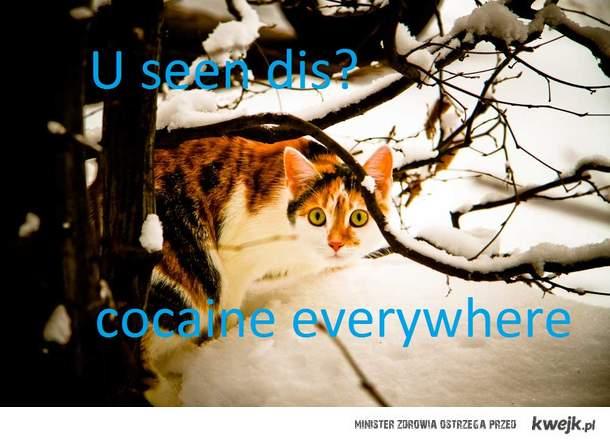 Franka kontra zima...