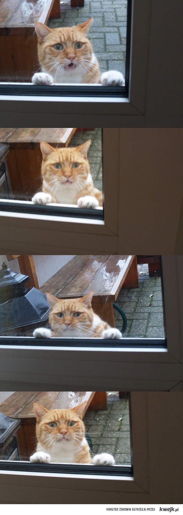 Proszę wpuść