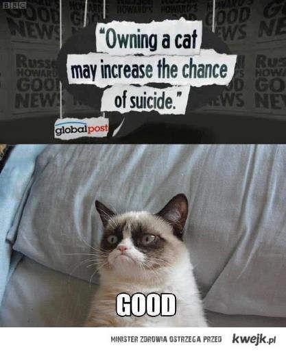 Gdy masz kota