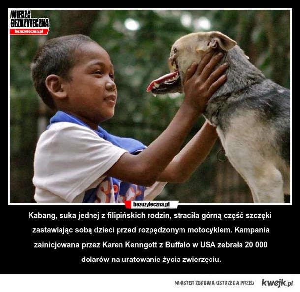 Miłość psa do rodziny