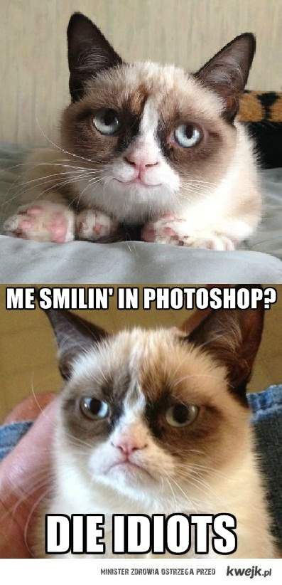 cat and photoshop fail