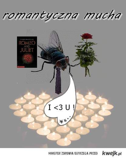 romantycznaaaamucha