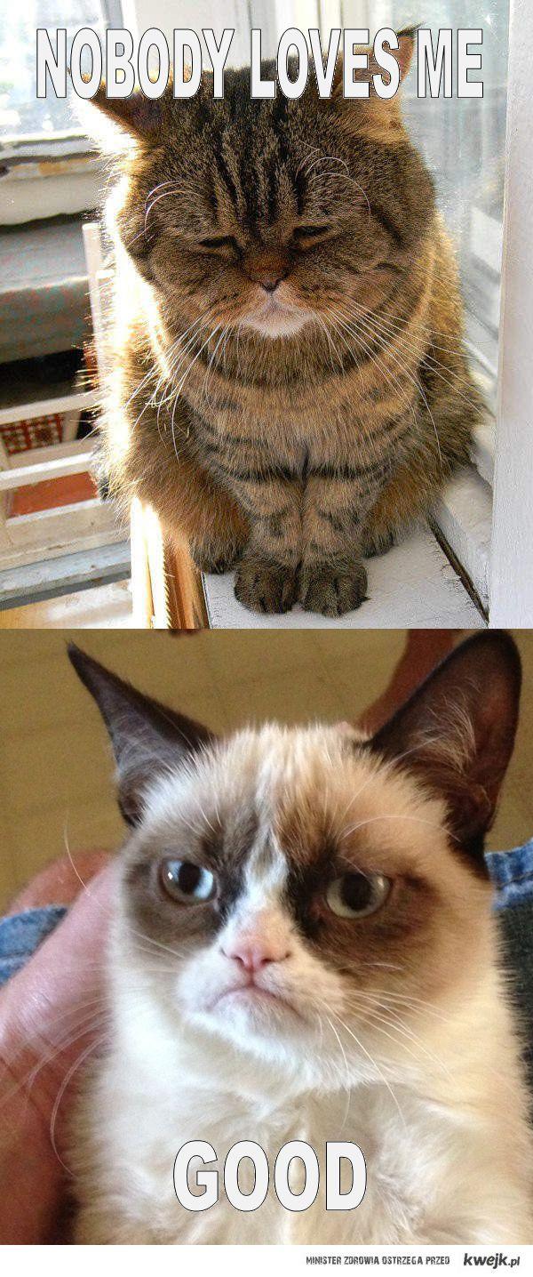 sad cat vs. grumpy cat
