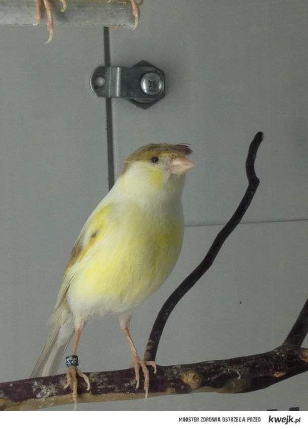 Dziwny ptak