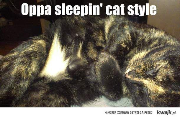 Gangnam cat