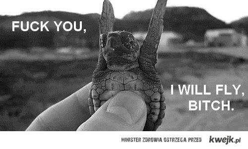 I will fly...
