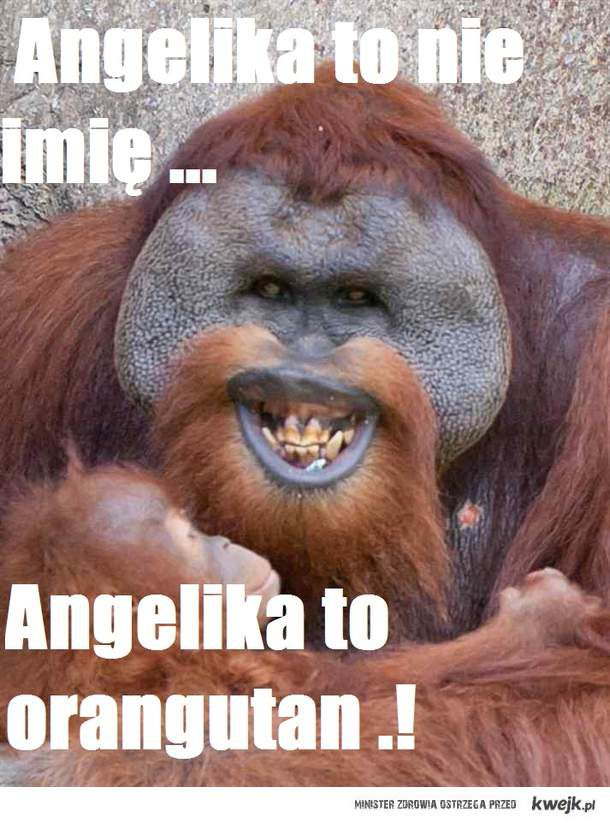 Angelika to nie imie. angelika to orangutan