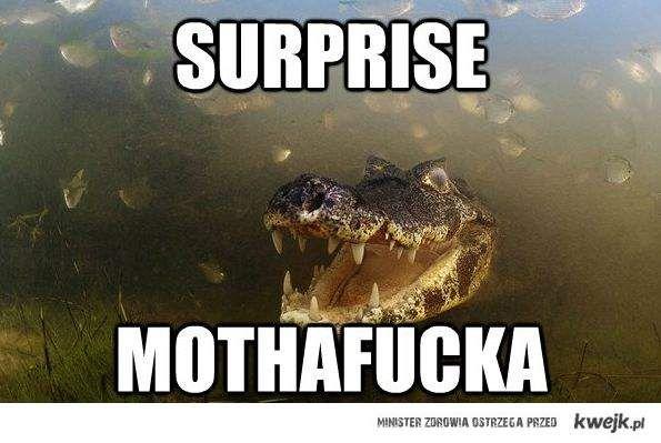 Surprise mothafucka