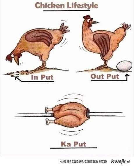 chicken lifestyle