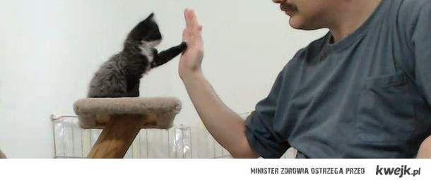 Kotek przybija piątkę