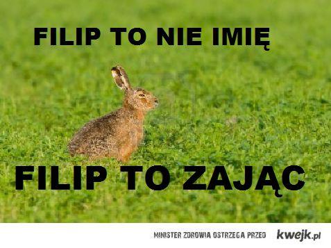Filip to nie imie, Filip to zajac
