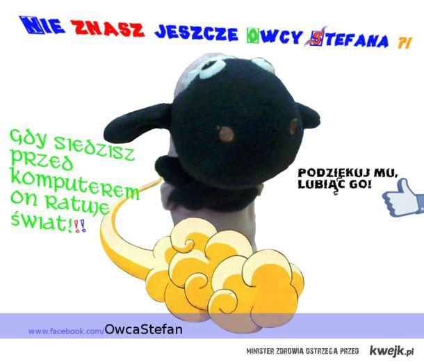 Owca Stefan