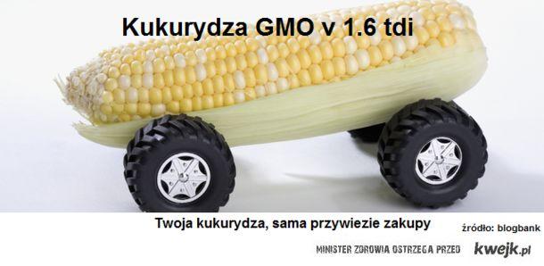 Kukurydza zmodyfikowana genetycznie