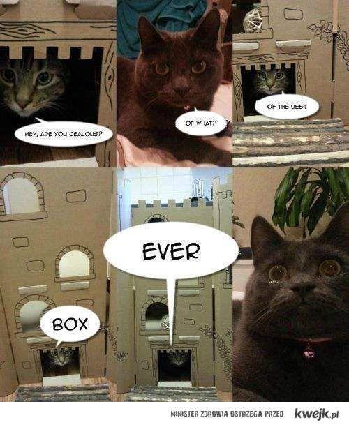 BEST BOX EVER