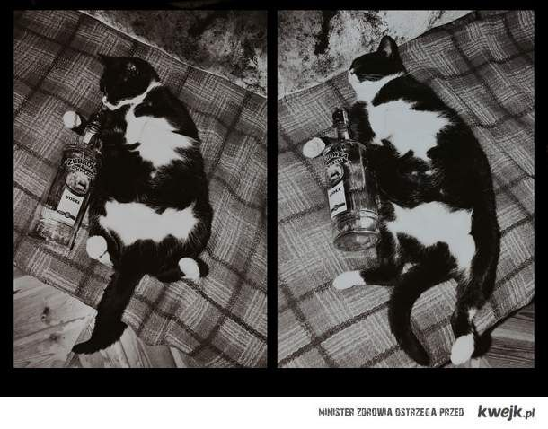 go home cat...you are drunk!