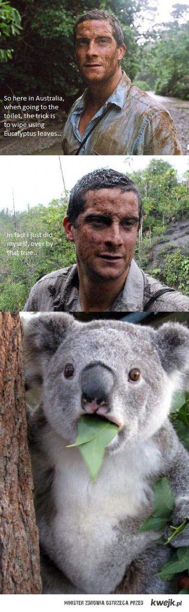 w australii podcierasz sie liscmi