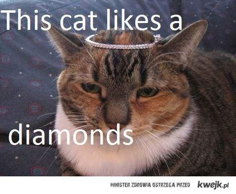 ROYAL CAT