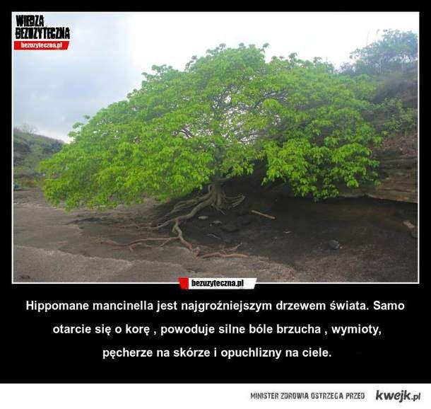 Mordercze drzewo