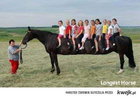 Jaki jest koń - każdy widzi!