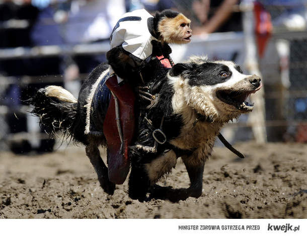 Monkey rides dog
