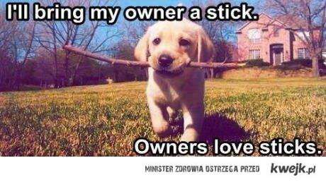 owners love sticks