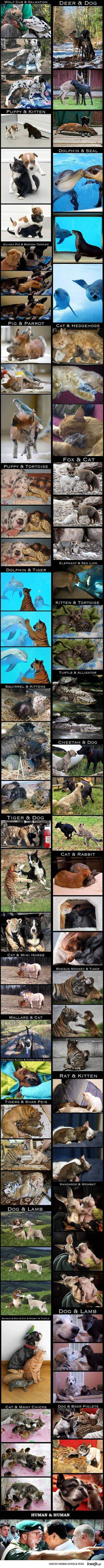 Zwierzęta są bardziej ludzkie niż ludzie