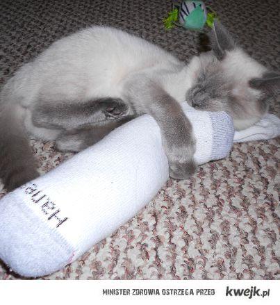 Bayo the Blind Kitten