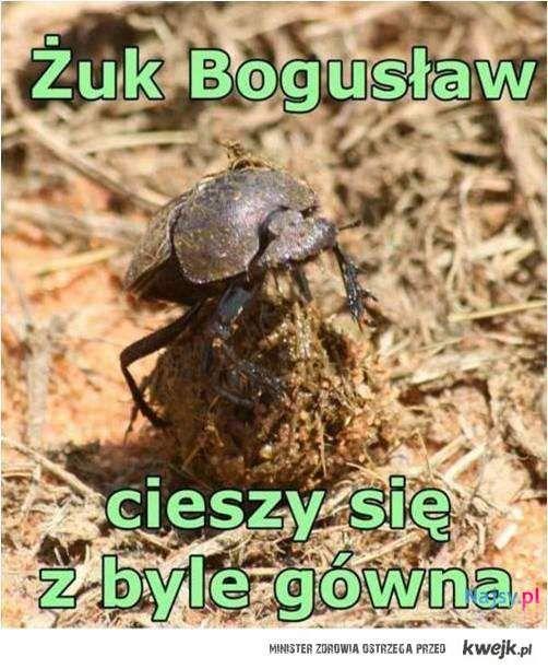 Żuk Bogusław