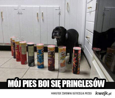 moj pies
