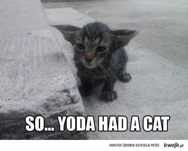 Więc mówisz że yoda miał kota