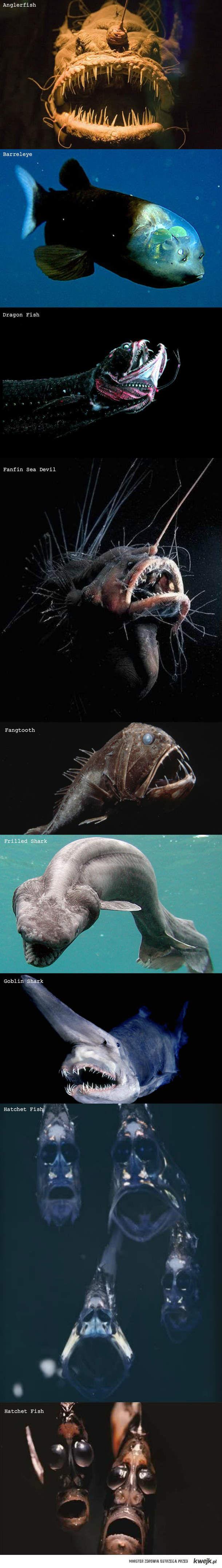 Potwory wodne