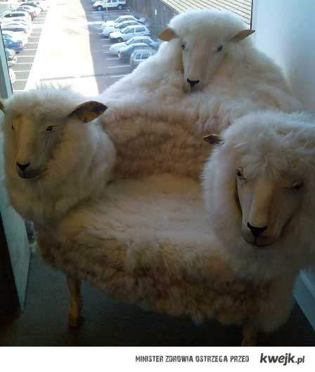 Fotel z owiec