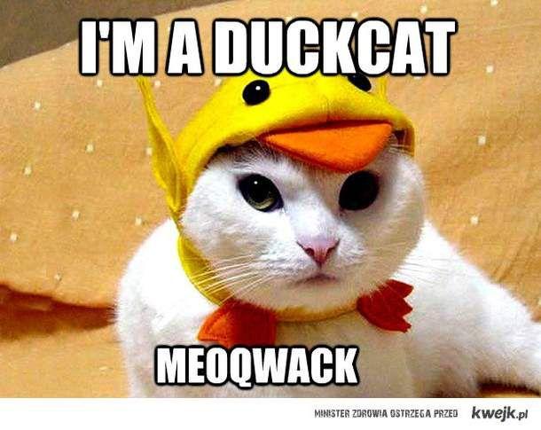 meoqwack!