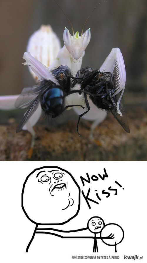 Now: Kiss!