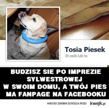 pies na facebooku