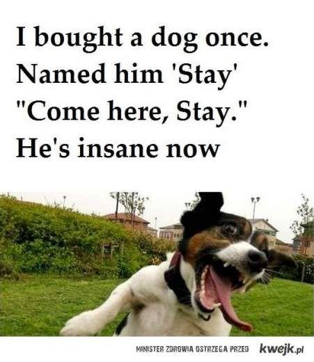 Stay Insane!