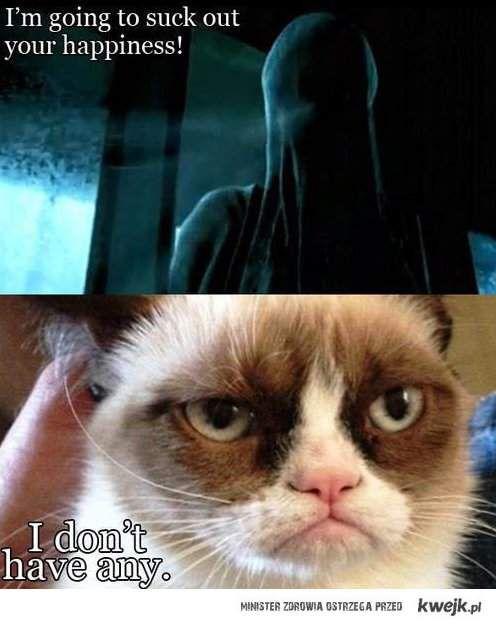 zrzędliwy kot