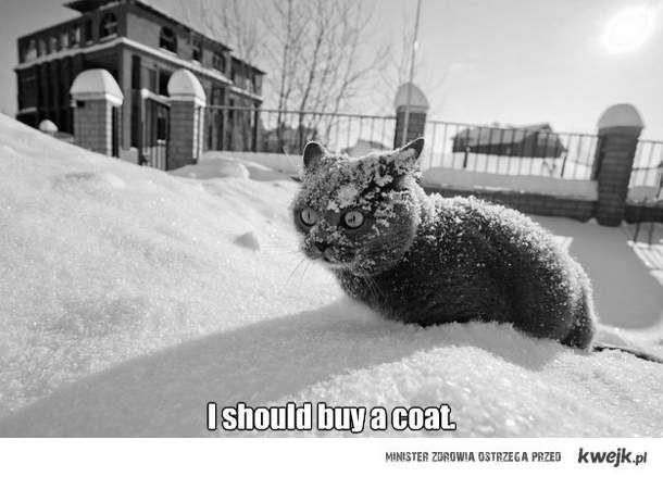 I shoud buy a coat