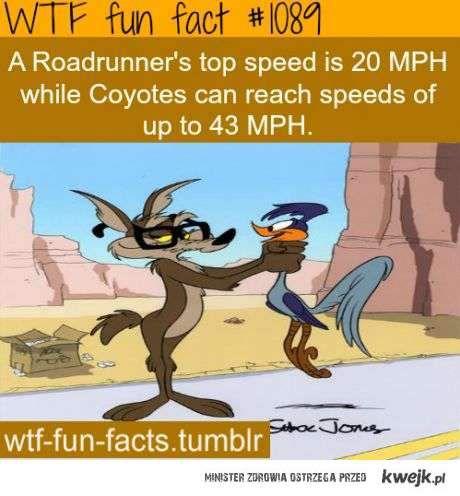 kojot jest szybszy
