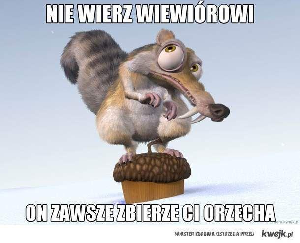 Nie wierz wiewiórowi