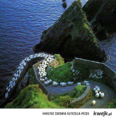 korek w Irlandi