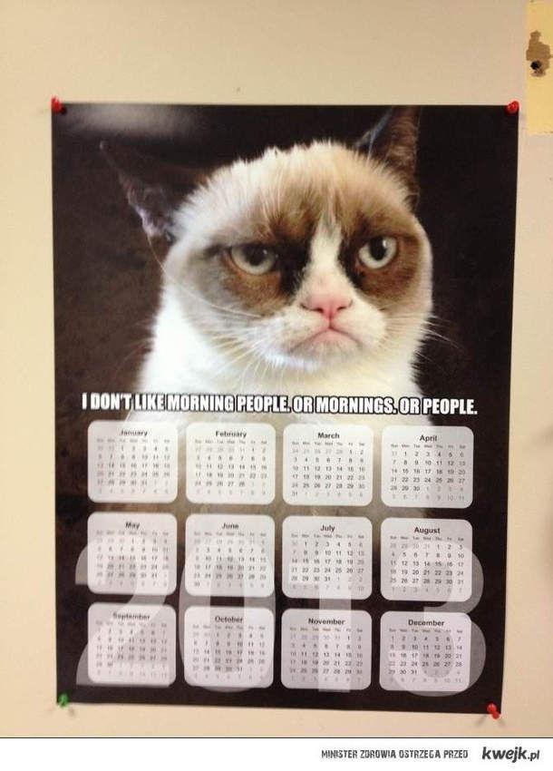 grumpy cat kalendarz